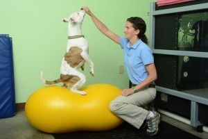 Upstate Veterinary Specialties