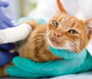 Cat held by Vet Tech