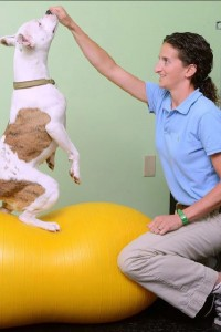 Dr. Laura Perez Rehabilitation