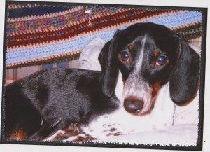 Dr. Todd Bishop success story dachshund