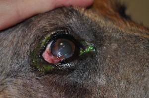 Hans' Eye