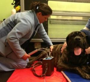 Ultrasound at Upstate Veterinary Specialties