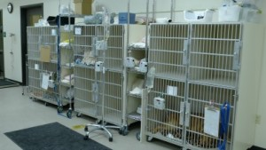 ICU Cages