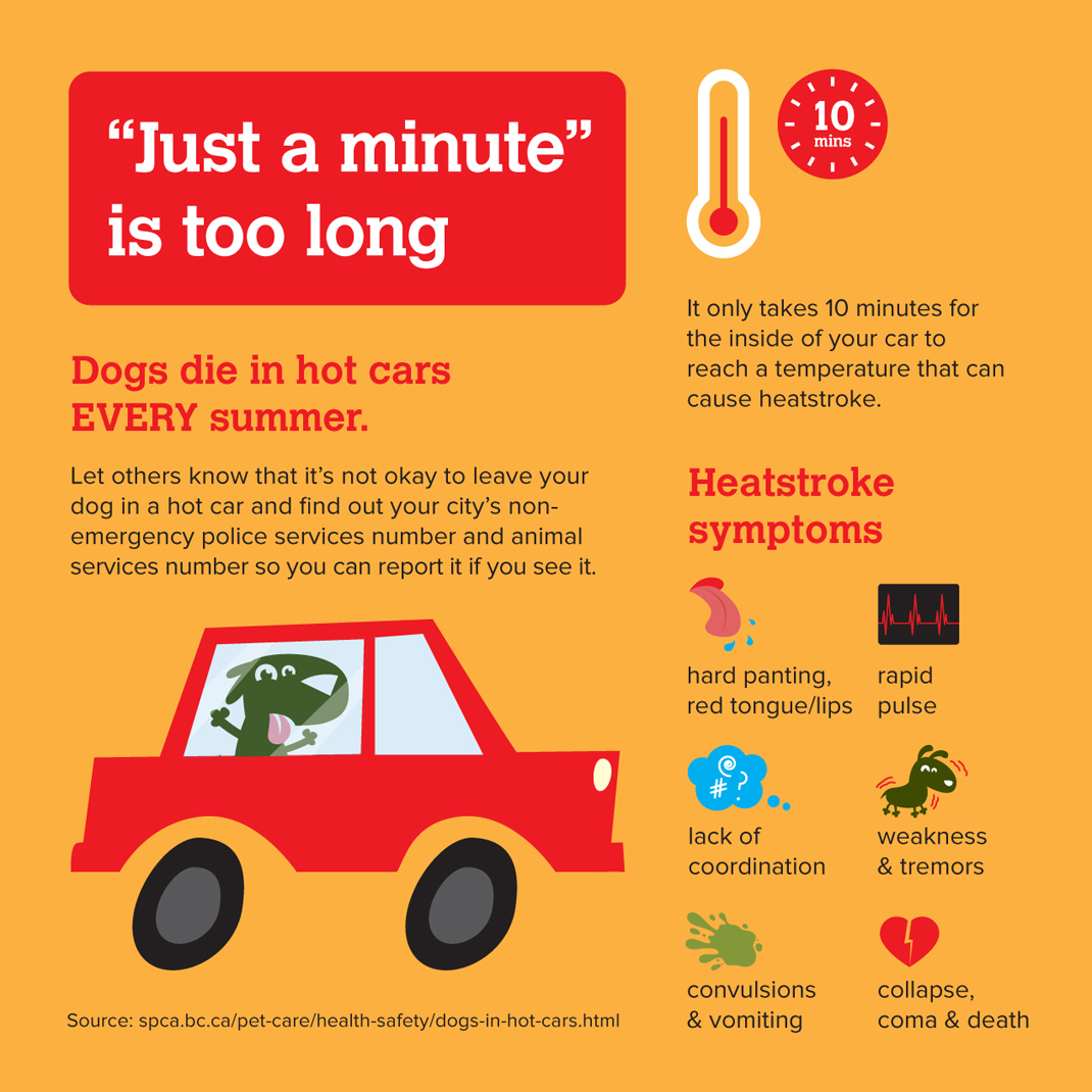 Leaving Dogs In Hot Car