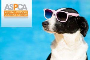 Summer_Pet_Toxins ASPCA