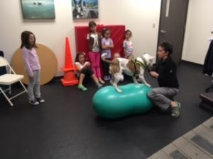 Girl Scouts Tour UVS and Learn About Veterinary Rehabilitation